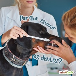 Kit Escova Dental 3 Peças